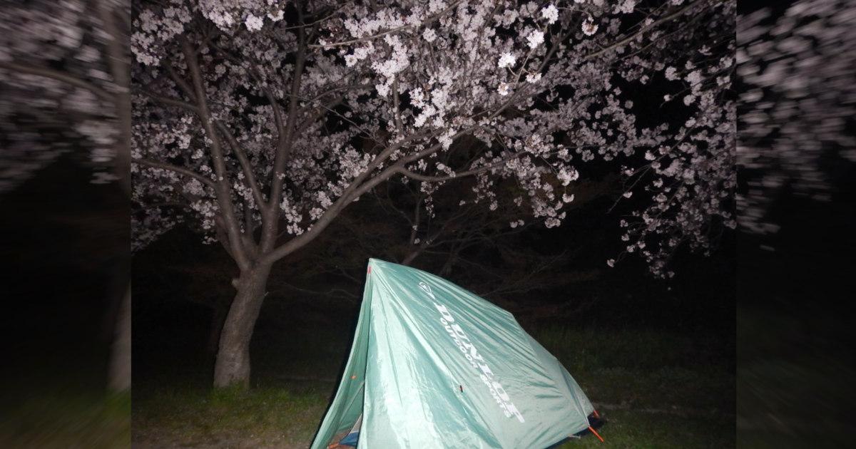 桜の下でテント泊